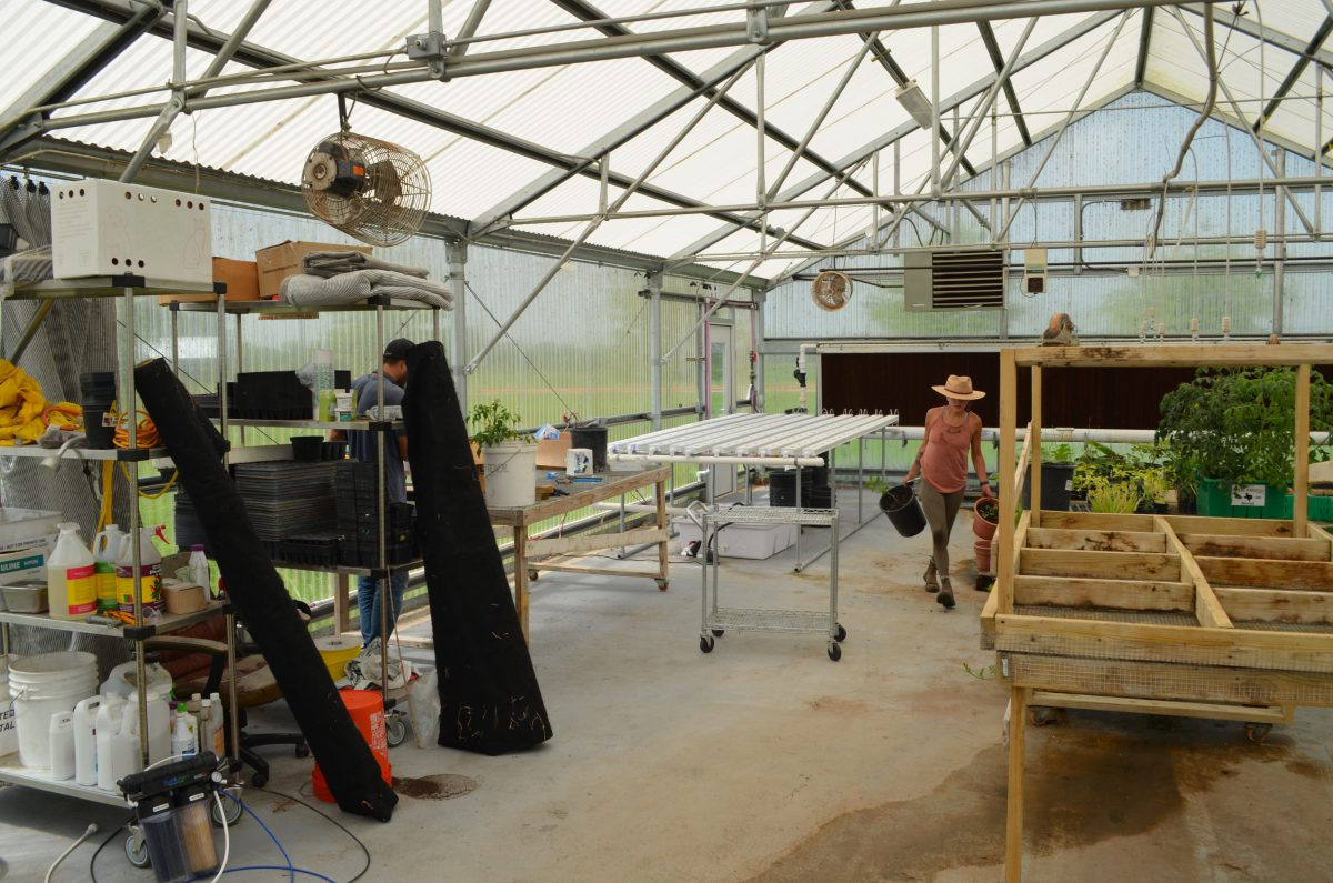 Farm assistants moving plants in and out of the greenhouse for regular maintenance.