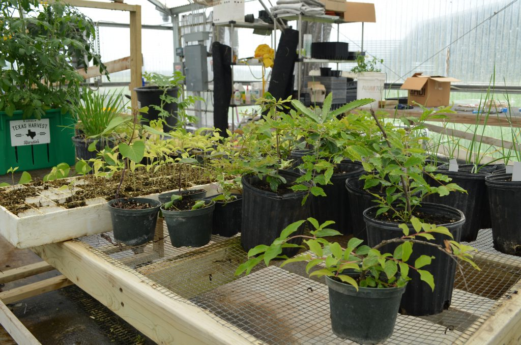 Plants in their early stages avoid the harsh summer heats inside the cooler greenhouse.