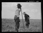 Cotton Sharecroppers. Greene County, Georgia, 1937