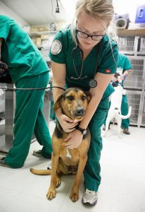 vet tech student with dog