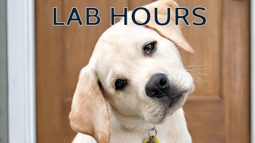labhours-puppy
